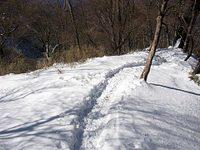 Hinoki_feb11