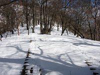 Hinoki_feb16
