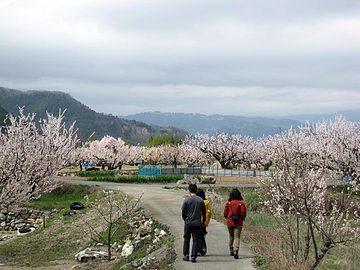 Hakunori31