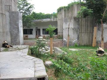 Panda025