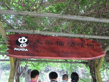 Panda039