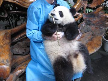 Panda099
